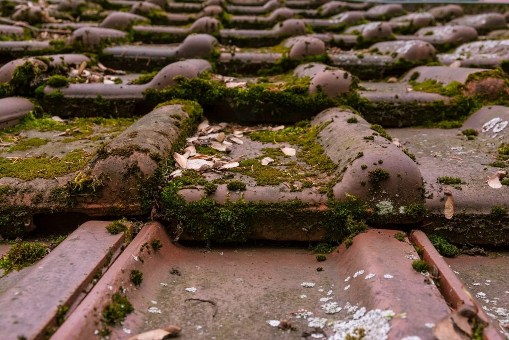 Goodbye, Clingy Moss: How to Remove Moss from Your Roof -